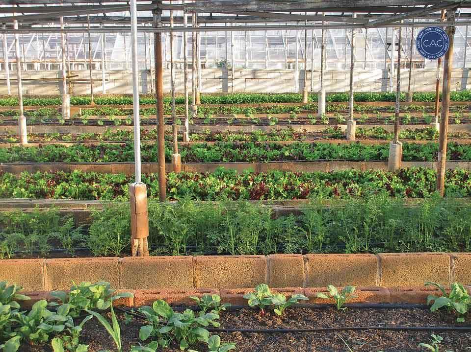 Chứng nhận nông nghiệp hữu cơ